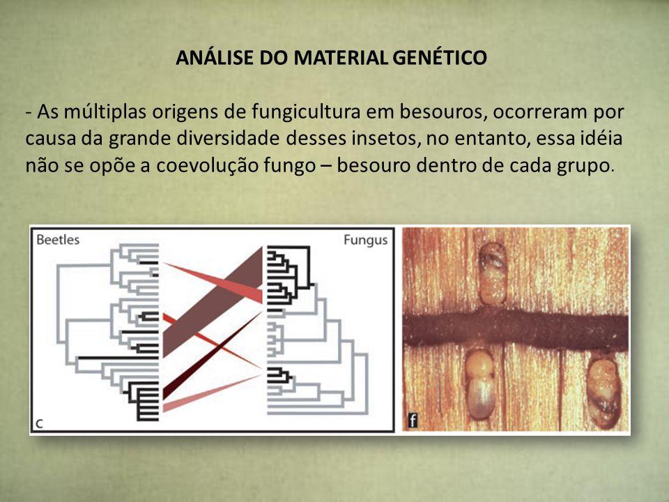 ANÁLISE DO MATERIAL GENÉTICO - As múltiplas origens de fungicultura em besouros, ocorreram por causa da grande diversidade desses insetos, no entanto,