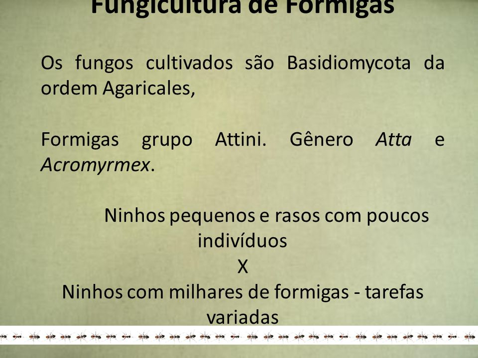 Fungicultura de Formigas Os fungos cultivados são Basidiomycota da ordem Agaricales, Formigas grupo Attini. Gênero Atta e Acromyrmex. Ninhos pequenos