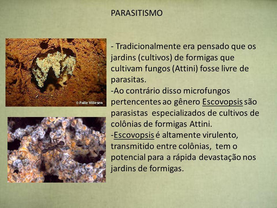 PARASITISMO - Tradicionalmente era pensado que os jardins (cultivos) de formigas que cultivam fungos (Attini) fosse livre de parasitas. -Ao contrário