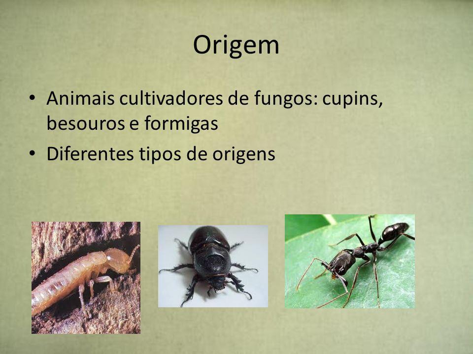Origem Animais cultivadores de fungos: cupins, besouros e formigas Diferentes tipos de origens