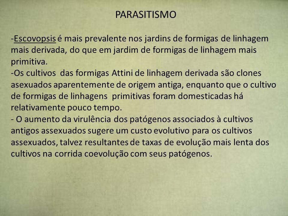 PARASITISMO -Escovopsis é mais prevalente nos jardins de formigas de linhagem mais derivada, do que em jardim de formigas de linhagem mais primitiva.