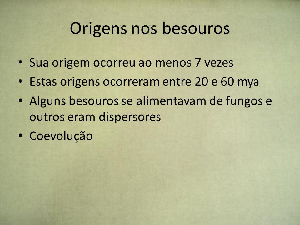 Origens nos besouros Sua origem ocorreu ao menos 7 vezes Estas origens ocorreram entre 20 e 60 mya Alguns besouros se alimentavam de fungos e outros e