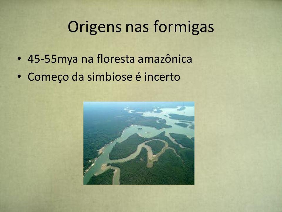 Origens nas formigas 45-55mya na floresta amazônica Começo da simbiose é incerto