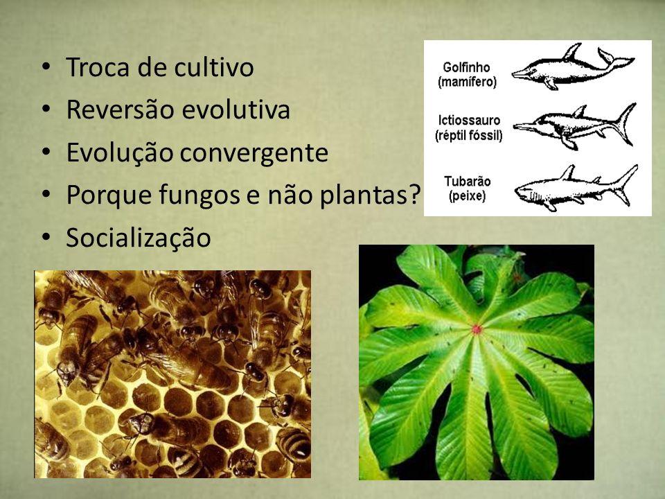 Material coletado ninho processado jardim fúngico câmara subterrâneafonte nutricional para o fungo monocultura