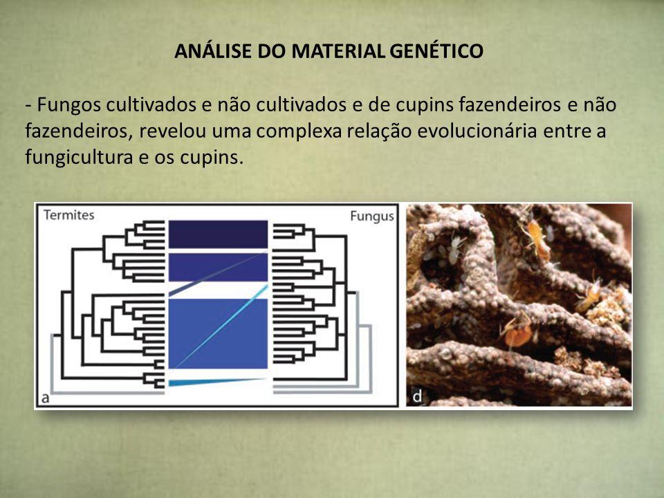 ANÁLISE DO MATERIAL GENÉTICO - Fungos cultivados e não cultivados e de cupins fazendeiros e não fazendeiros, revelou uma complexa relação evolucionári