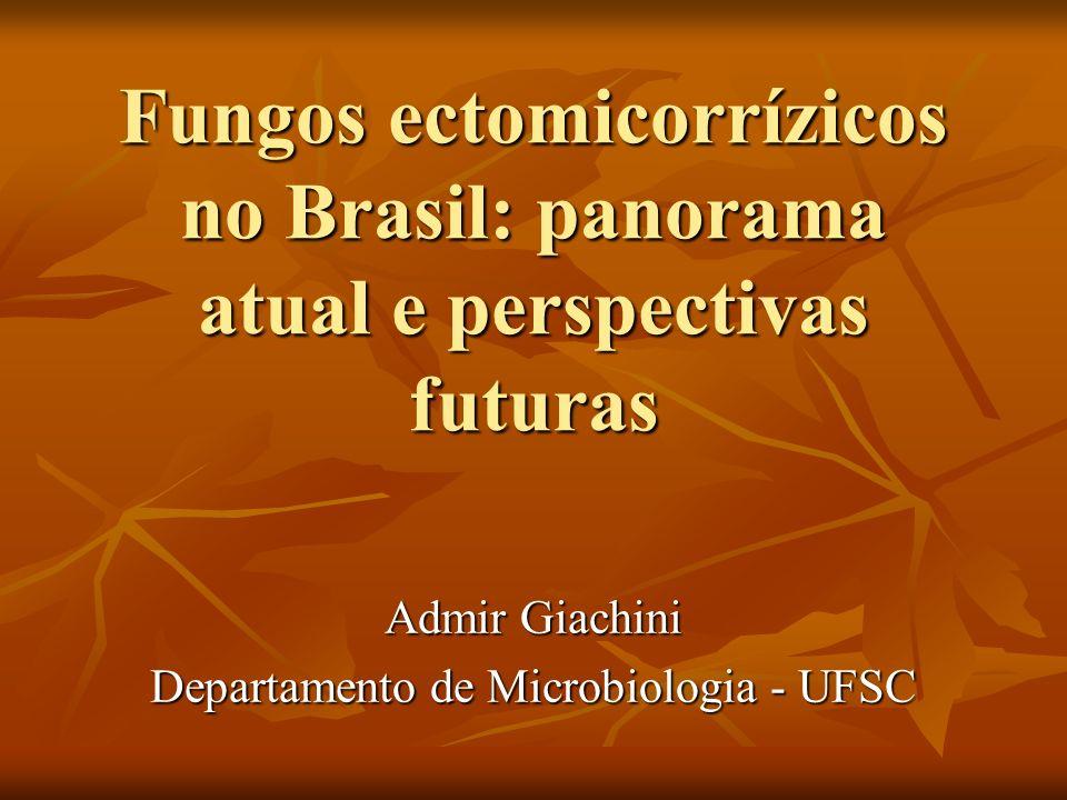 Fungos ectomicorrízicos no Brasil: panorama atual e perspectivas futuras Admir Giachini Departamento de Microbiologia - UFSC