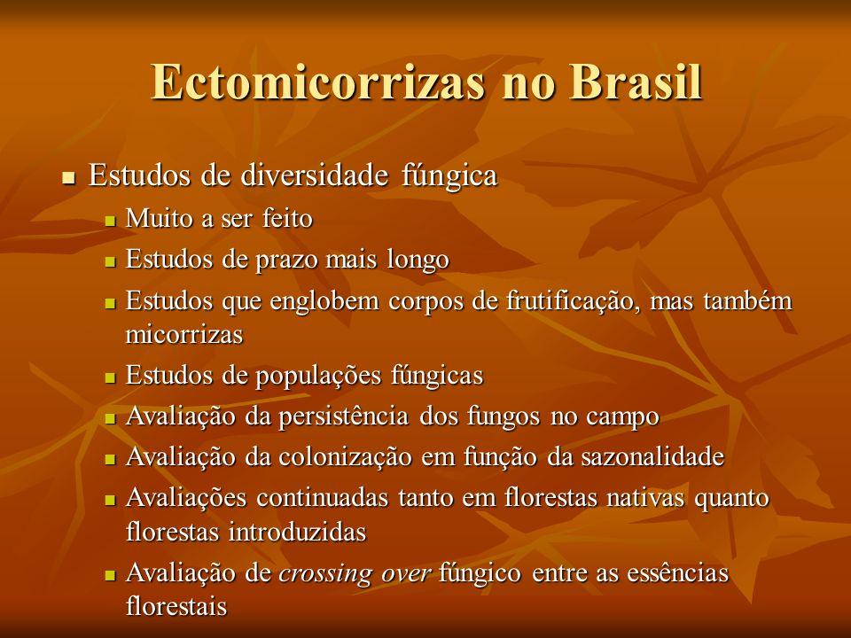 Ectomicorrizas no Brasil Estudos de diversidade fúngica Estudos de diversidade fúngica Muito a ser feito Muito a ser feito Estudos de prazo mais longo