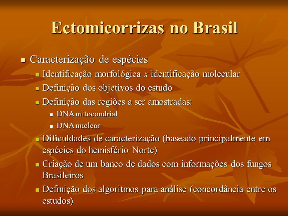 Ectomicorrizas no Brasil Caracterização de espécies Caracterização de espécies Identificação morfológica x identificação molecular Identificação morfo