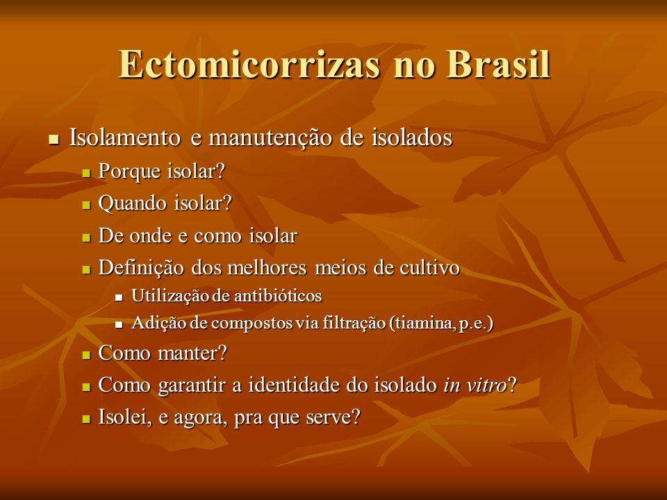 Ectomicorrizas no Brasil Isolamento e manutenção de isolados Isolamento e manutenção de isolados Porque isolar? Porque isolar? Quando isolar? Quando i