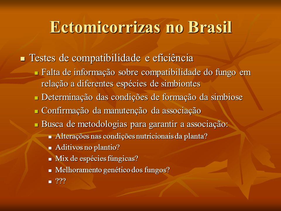 Ectomicorrizas no Brasil Testes de compatibilidade e eficiência Testes de compatibilidade e eficiência Falta de informação sobre compatibilidade do fu