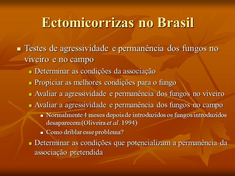 Ectomicorrizas no Brasil Testes de agressividade e permanência dos fungos no viveiro e no campo Testes de agressividade e permanência dos fungos no vi