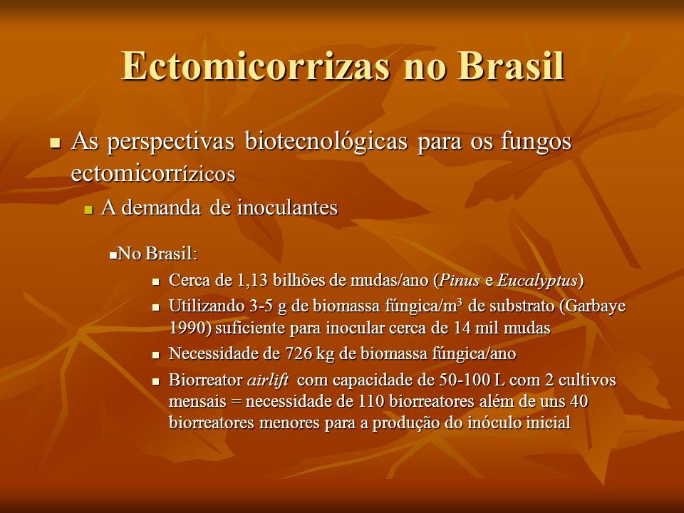 Ectomicorrizas no Brasil As perspectivas biotecnológicas para os fungos ectomicorr ízicos As perspectivas biotecnológicas para os fungos ectomicorr íz