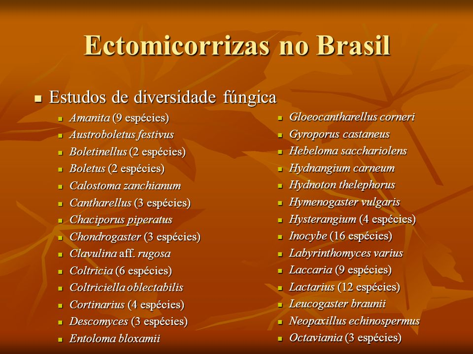 Ectomicorrizas no Brasil Estudos de diversidade fúngica Estudos de diversidade fúngica Amanita (9 espécies) Amanita (9 espécies) Austroboletus festivu