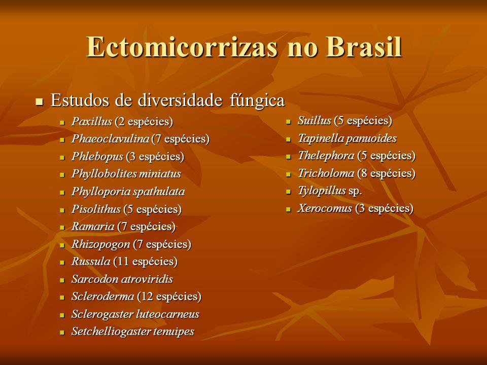 Ectomicorrizas no Brasil Estudos de diversidade fúngica Estudos de diversidade fúngica Paxillus (2 espécies) Paxillus (2 espécies) Phaeoclavulina (7 e