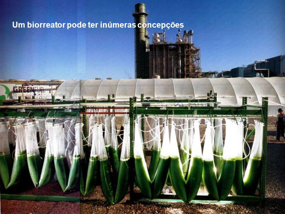 Um biorreator pode ter inúmeras concepções