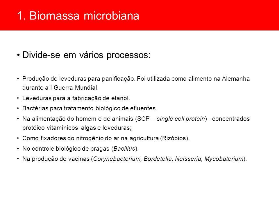 1. Biomassa microbiana Divide-se em vários processos: Produção de leveduras para panificação. Foi utilizada como alimento na Alemanha durante a I Guer