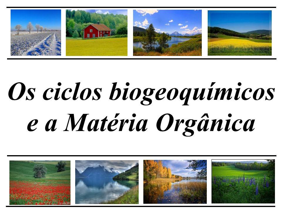 Decomposição da Matéria Orgânica - Macrorganismos = reguladores da degradação (engenheiros) - Microrganismos = Transformadores Macrofauna Representantes no nível trófico mais alto na cadeia Microrganismos Decompositores primários Produtores primários
