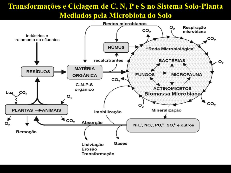 Mineralização da Matéria Orgânica -Processo envolvido na transformação de substâncias orgânicas de baixo peso molecular em formas inorgânicas.