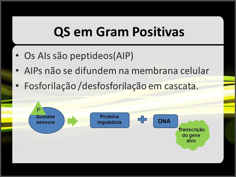 QS em Gram Positivas Os AIs são peptideos(AIP) AIPs não se difundem na membrana celular Fosforilação /desfosforilação em cascata. Quinase sensora P Pr