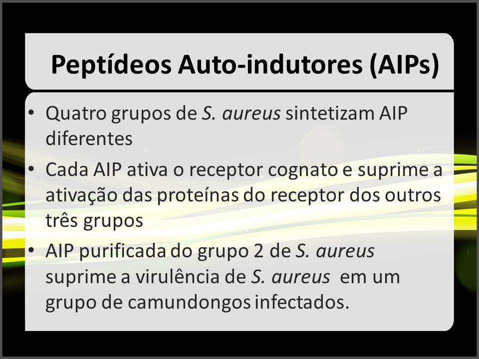 Peptídeos Auto-indutores (AIPs) Quatro grupos de S. aureus sintetizam AIP diferentes Cada AIP ativa o receptor cognato e suprime a ativação das proteí