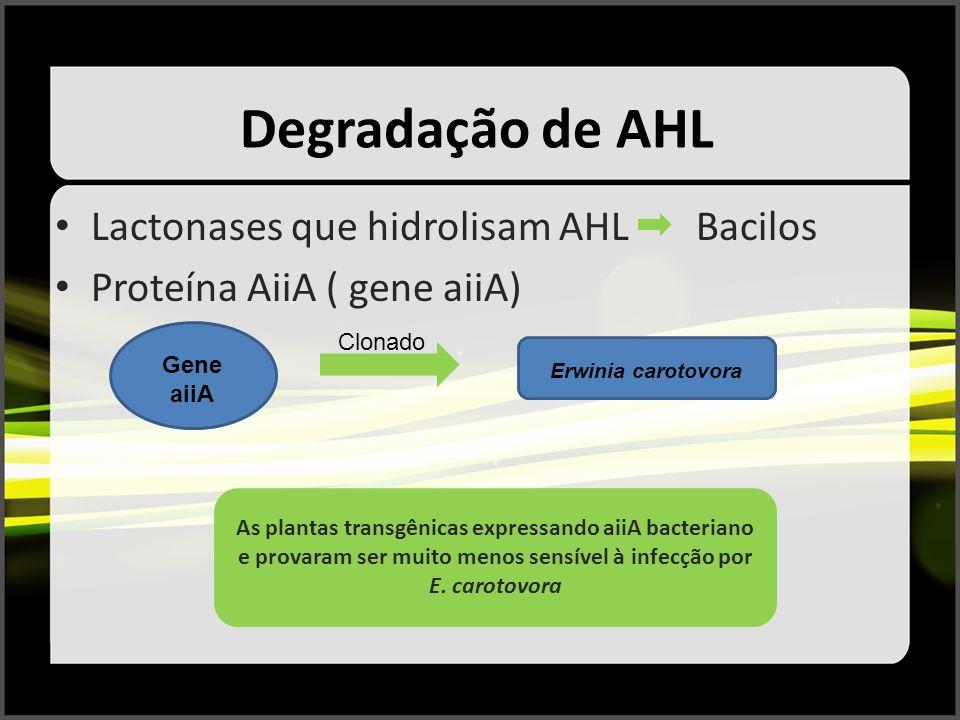 Degradação de AHL Lactonases que hidrolisam AHL Bacilos Proteína AiiA ( gene aiiA) Gene aiiA Clonado Erwinia carotovora As plantas transgênicas expres