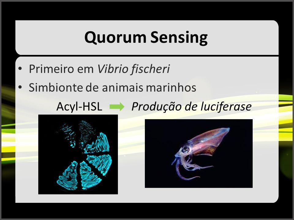 Quorum Sensing Primeiro em Vibrio fischeri Simbionte de animais marinhos Acyl-HSL Produção de luciferase