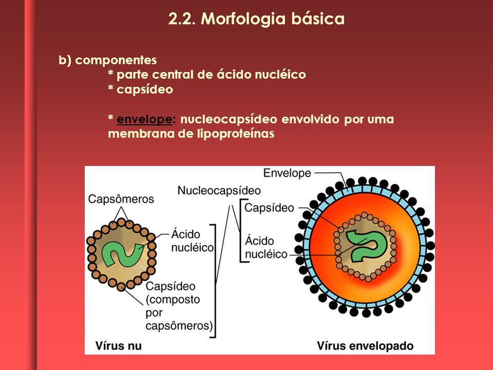 b) componentes * parte central de ácido nucléico * capsídeo * envelope: nucleocapsídeo envolvido por uma membrana de lipoproteínas 2.2. Morfologia bás