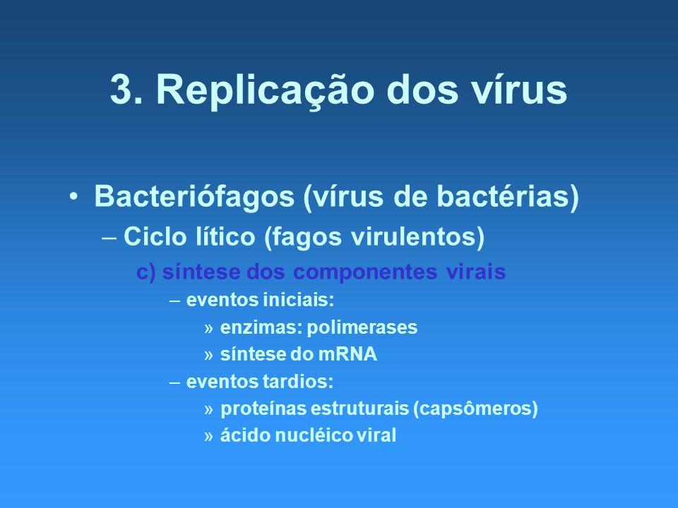 3. Replicação dos vírus Bacteriófagos (vírus de bactérias) –Ciclo lítico (fagos virulentos) c) síntese dos componentes virais –eventos iniciais: »enzi