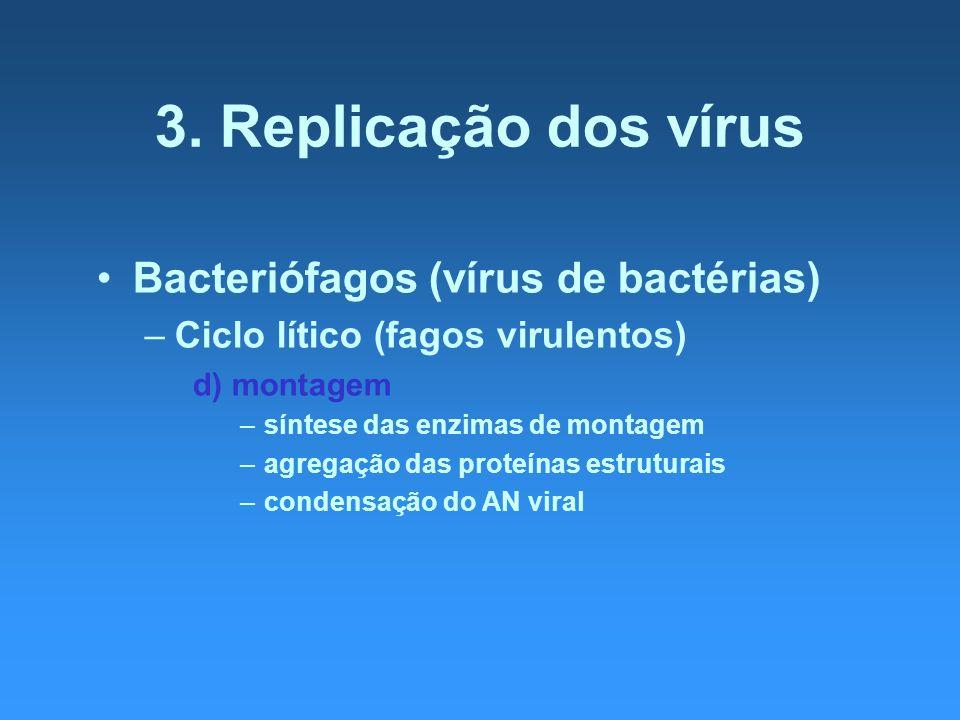3. Replicação dos vírus Bacteriófagos (vírus de bactérias) –Ciclo lítico (fagos virulentos) d) montagem –síntese das enzimas de montagem –agregação da