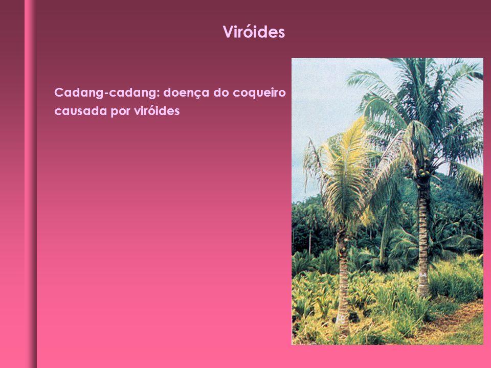 Cadang-cadang: doença do coqueiro causada por viróides Viróides