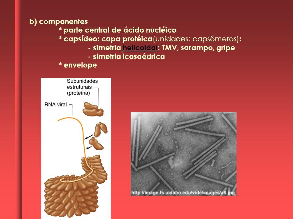 b) componentes * parte central de ácido nucléico * capsídeo: capa protéica (unidades: capsômeros) : - simetria helicoidal: TMV, sarampo, gripe - simet
