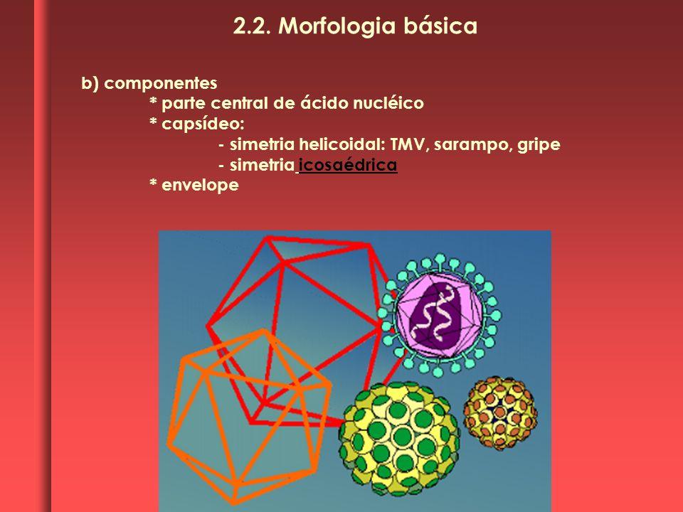 b) componentes * parte central de ácido nucléico * capsídeo: - simetria helicoidal: TMV, sarampo, gripe - simetria icosaédrica * envelope 2.2. Morfolo