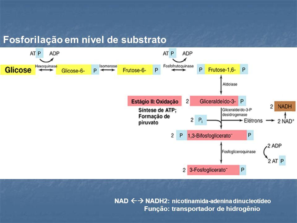 Fosforilação em nível de substrato NAD NADH2: nicotinamida-adenina dinucleotídeo Função: transportador de hidrogênio