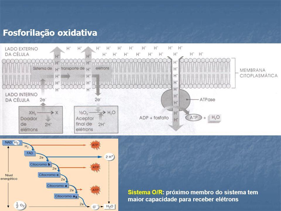Fosforilação oxidativa Sistema O/R: próximo membro do sistema tem maior capacidade para receber elétrons