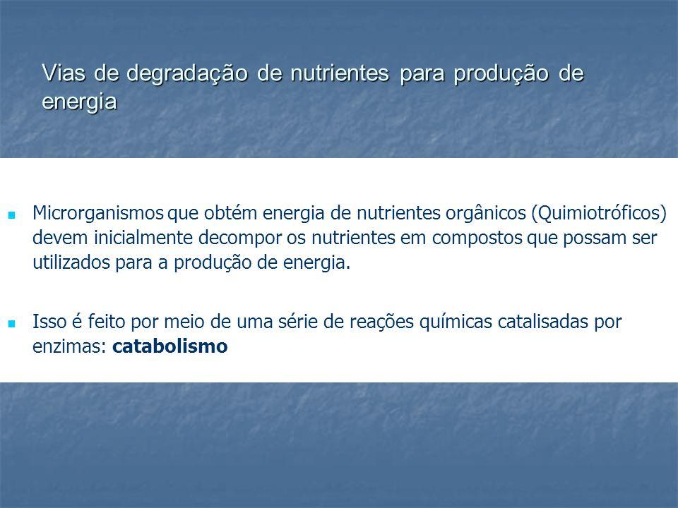 Vias de degradação de nutrientes para produção de energia Microrganismos que obtém energia de nutrientes orgânicos (Quimiotróficos) devem inicialmente