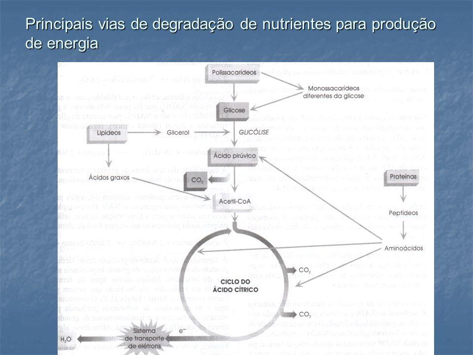Principais vias de degradação de nutrientes para produção de energia