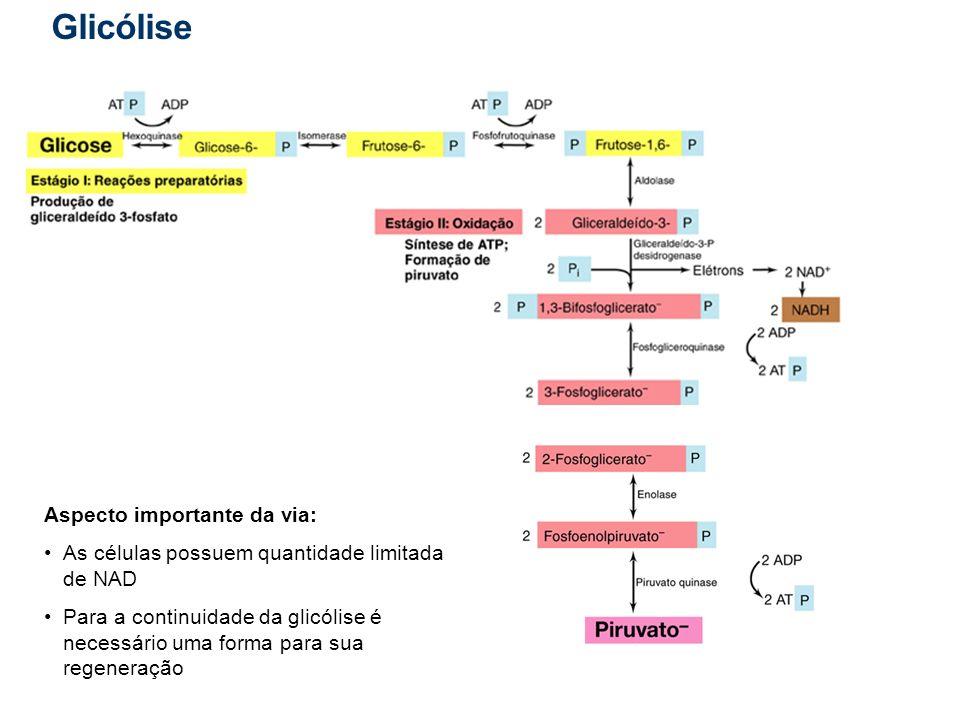 Glicólise Aspecto importante da via: As células possuem quantidade limitada de NAD Para a continuidade da glicólise é necessário uma forma para sua re