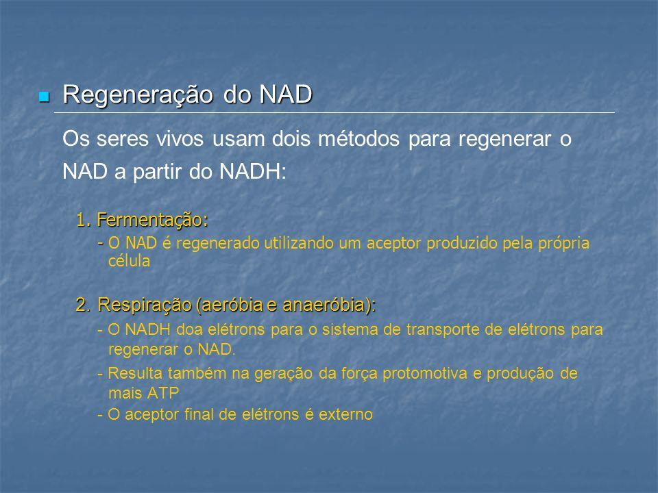 Regeneração do NAD Regeneração do NAD Os seres vivos usam dois métodos para regenerar o NAD a partir do NADH: 1. Fermentação: - - O NAD é regenerado u