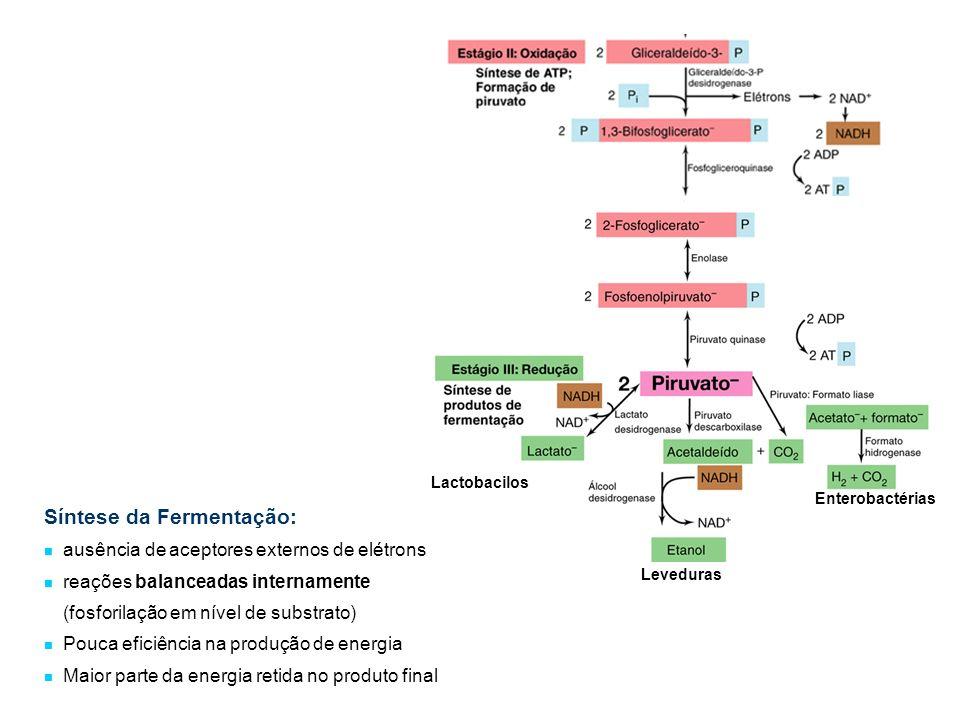 Lactobacilos Leveduras Enterobactérias Síntese da Fermentação: ausência de aceptores externos de elétrons reações balanceadas internamente (fosforilaç