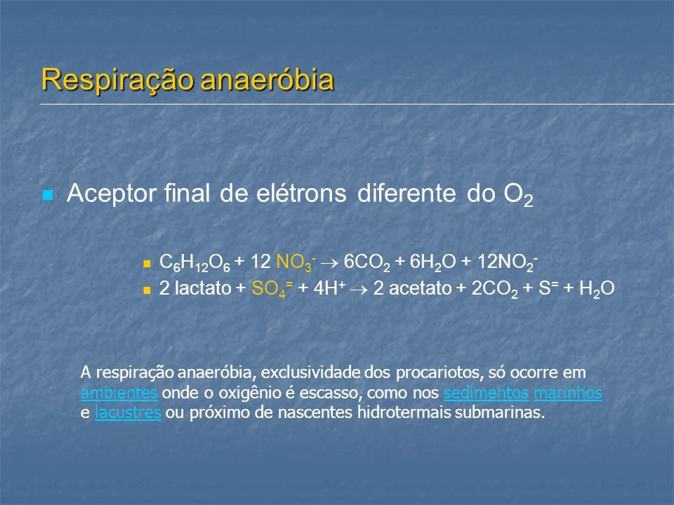 Respiração anaeróbia Aceptor final de elétrons diferente do O 2 C 6 H 12 O 6 + 12 NO 3 - 6CO 2 + 6H 2 O + 12NO 2 - 2 lactato + SO 4 = + 4H + 2 acetato