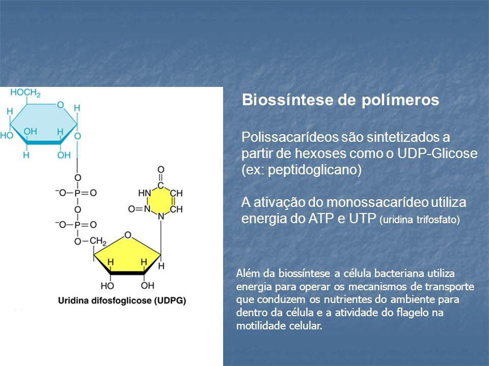 Biossíntese de polímeros Polissacarídeos são sintetizados a partir de hexoses como o UDP-Glicose (ex: peptidoglicano) A ativação do monossacarídeo uti