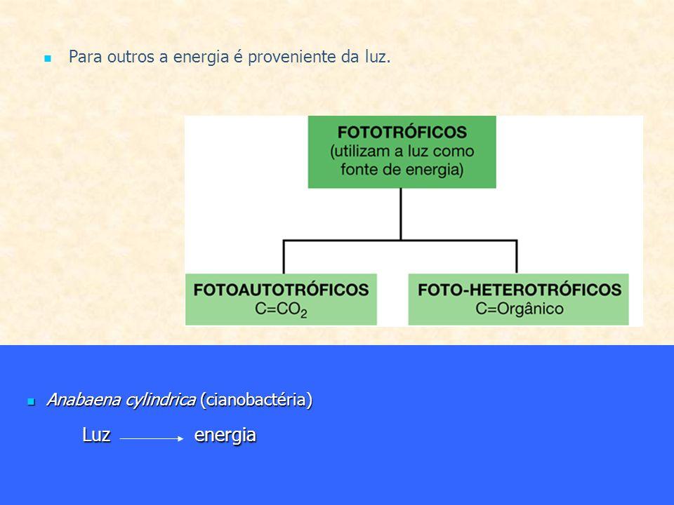 Para outros a energia é proveniente da luz. Anabaena cylindrica (cianobactéria) Anabaena cylindrica (cianobactéria) Luzenergia