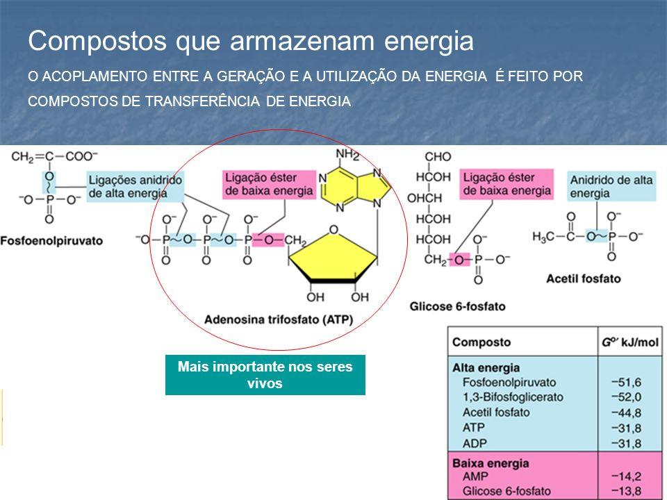 Fluxo da energia A concentração de ATP na célula é baixa.