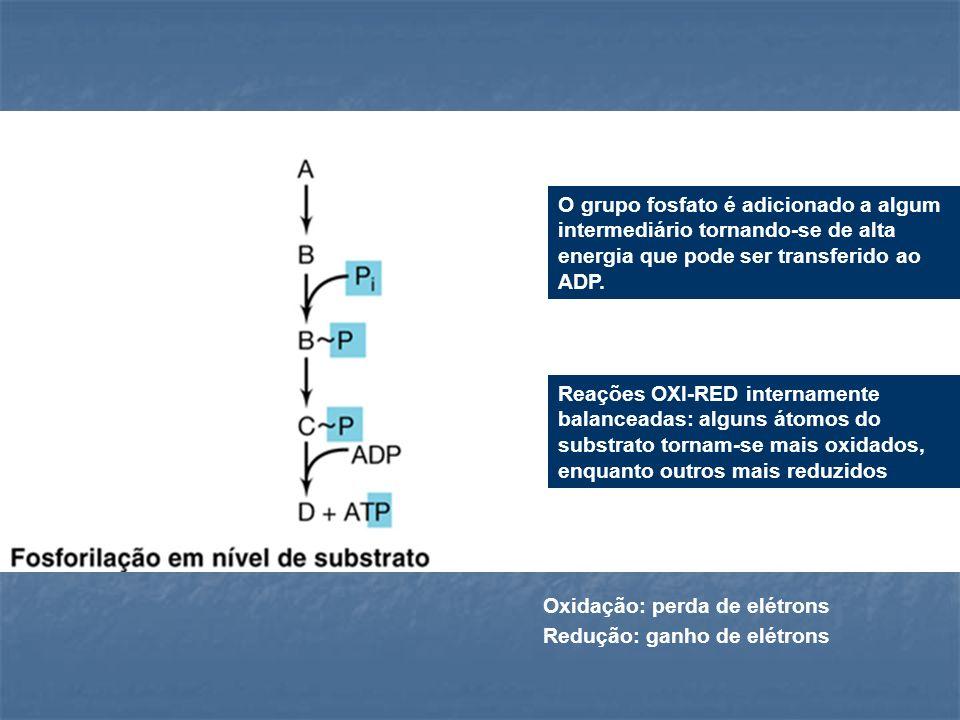 O grupo fosfato é adicionado a algum intermediário tornando-se de alta energia que pode ser transferido ao ADP. Reações OXI-RED internamente balancead