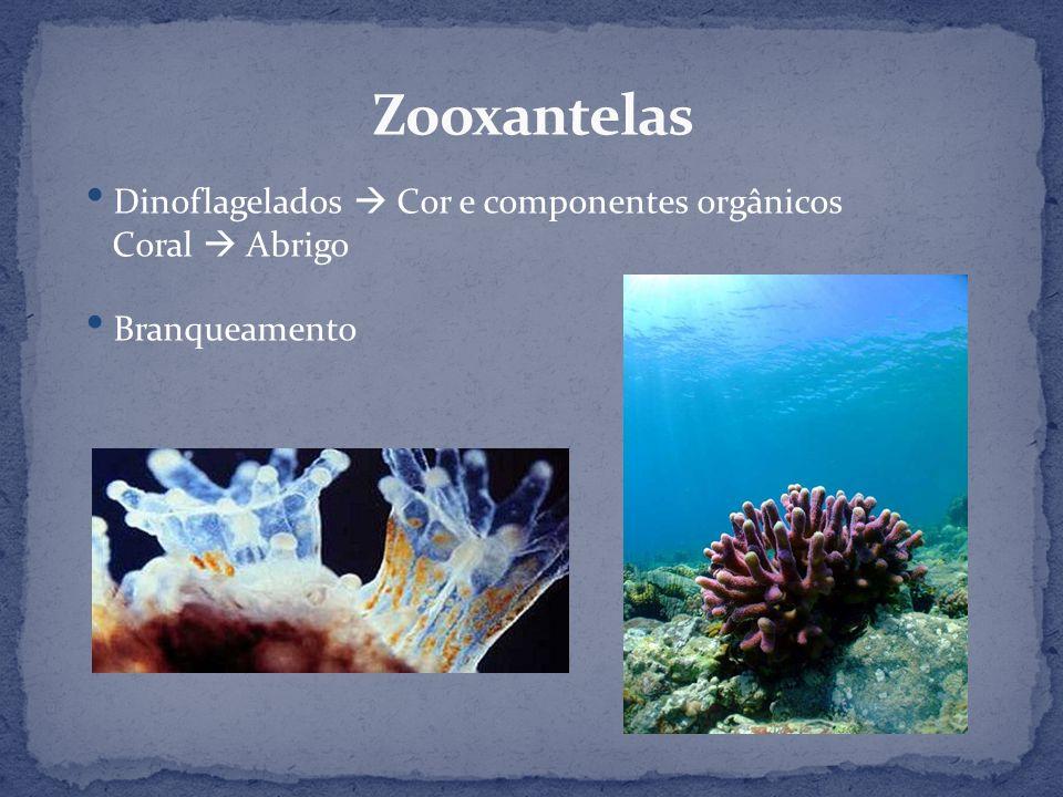 Dinoflagelados Cor e componentes orgânicos Coral Abrigo Branqueamento