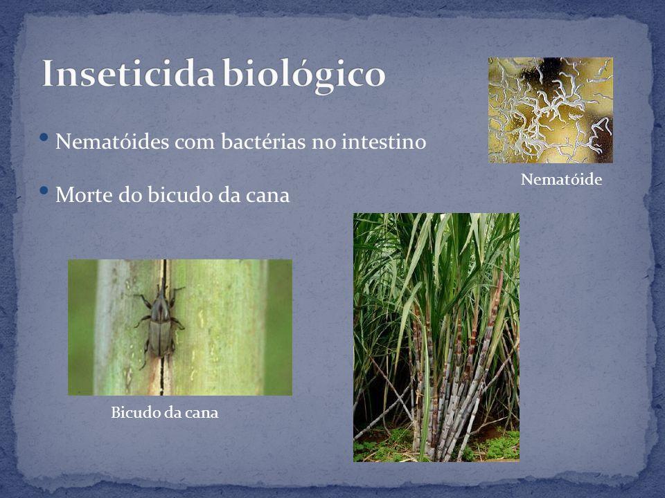Nematóides com bactérias no intestino Morte do bicudo da cana Bicudo da cana Nematóide