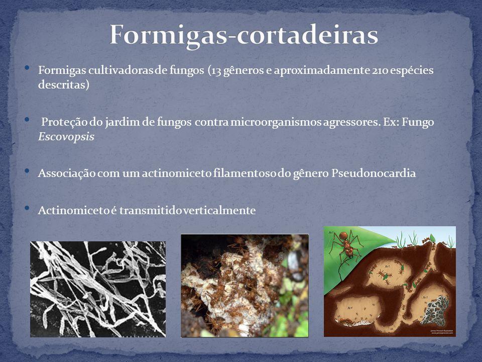 Formigas cultivadoras de fungos (13 gêneros e aproximadamente 210 espécies descritas) Proteção do jardim de fungos contra microorganismos agressores.