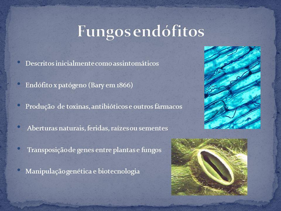 Descritos inicialmente como assintomáticos Endófito x patógeno (Bary em 1866) Produção de toxinas, antibióticos e outros fármacos Aberturas naturais,