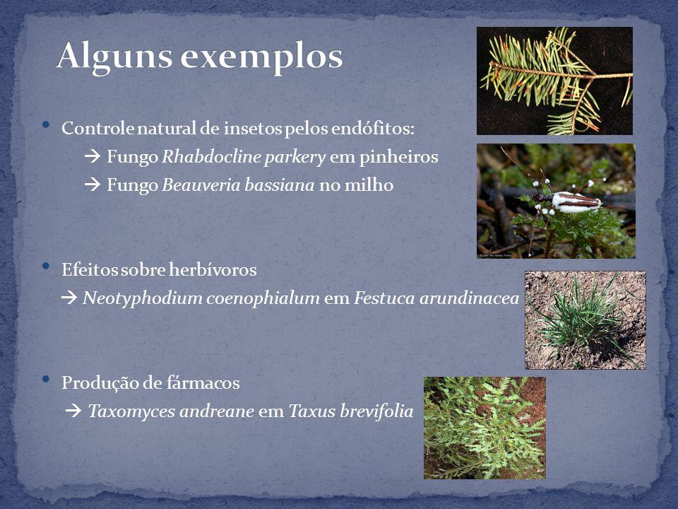 Controle natural de insetos pelos endófitos: Fungo Rhabdocline parkery em pinheiros Fungo Beauveria bassiana no milho Efeitos sobre herbívoros Neotyph