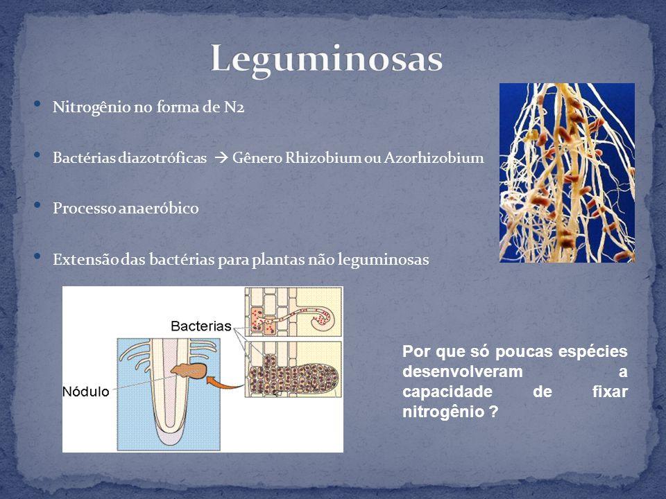 Nitrogênio no forma de N2 Bactérias diazotróficas Gênero Rhizobium ou Azorhizobium Processo anaeróbico Extensão das bactérias para plantas não legumin